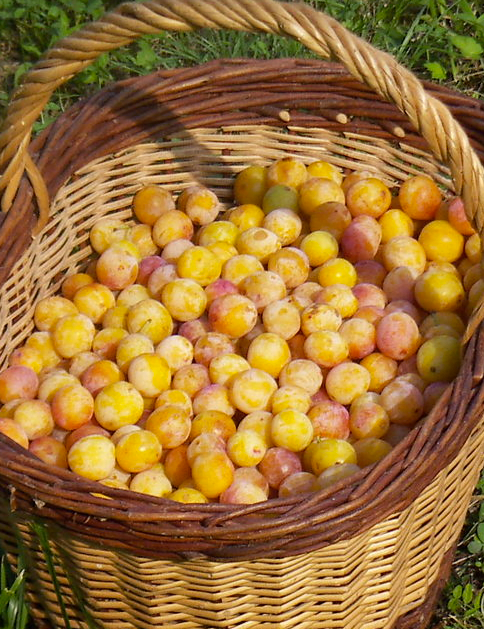 6-89624-french-plums-1421266099