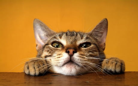 PAR00316RM-00211398-001 Animal Cat