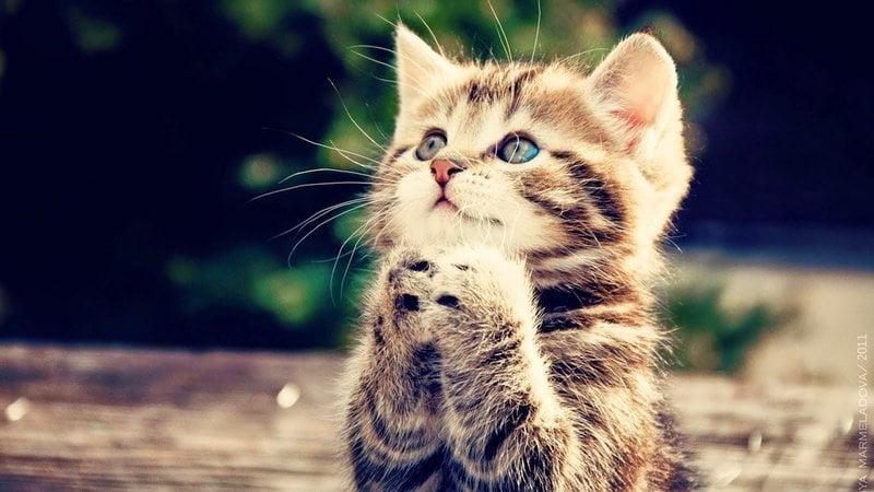 kucing cari perhatian