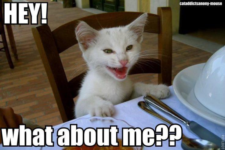 kucing lapar