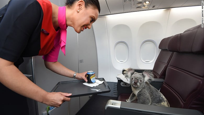 qantas-koalas-singapore-water-exlarge-169
